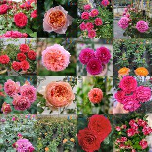 Combo Vườn hồng ngoại 15 loại